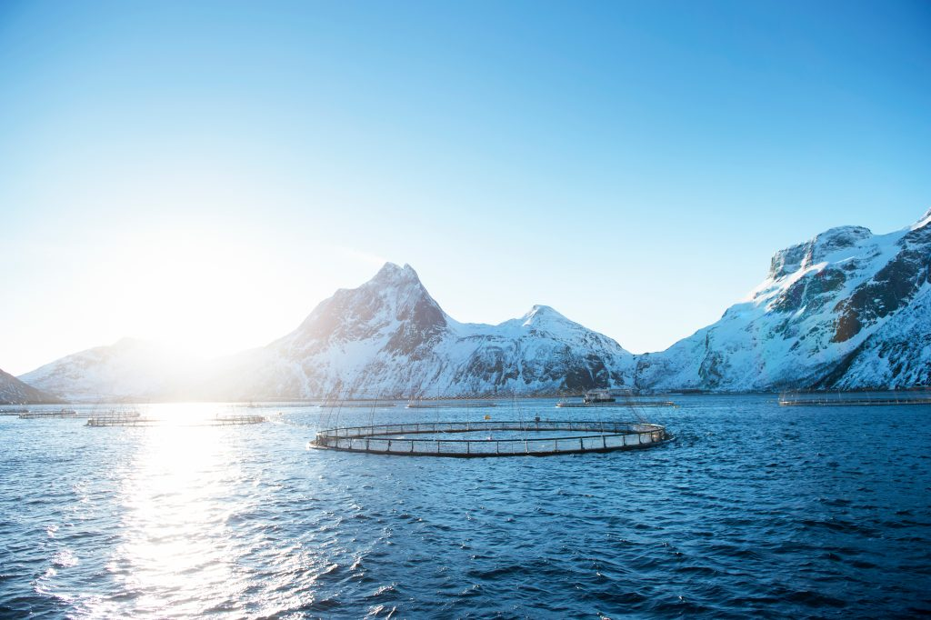 Harvesting salmon on the North Sea in Norway